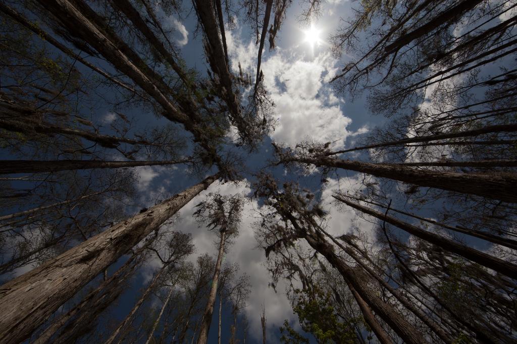 trees1-bg