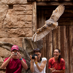 attack-of-the-owl